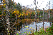 Fir Trees Photos - Pond on Limekiln Road by David Patterson