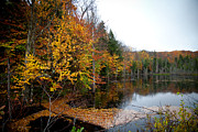 Adirondack Lakes Posters - Pond on Limekiln Road II Poster by David Patterson