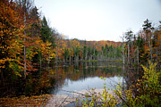 Fir Trees Photos - Pond on Limekiln Road in Inlet New York by David Patterson