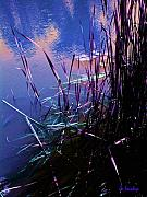 Lilly Pad Prints - Pond Reeds at Sunset Print by Joanne Smoley