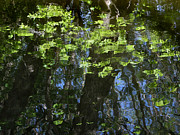 Reflecting Water Prints - Pond Reflection 1 Print by Janeen Wassink Searles