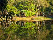 Forest Art - Pond Reflection Guatemala by Kurt Van Wagner