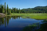 Marilyn Wilson - Pond Reflection