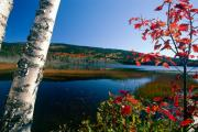 Birch Lake Prints - Pond with Autumn Colors Acadia National Park Maine Print by George Oze