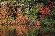 Golden Pond Framed Prints - Pond with trees in the Fall or Autumn Framed Print by Nicholas Burningham