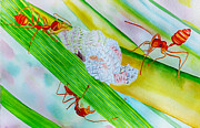 Colorful Photos Painting Prints - Ponderosa Aphid Farm Print by Roy Foos