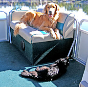 Dog And Cat Posters - Pontoon Pals Poster by Kara Kincade