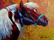 Mustangs Framed Prints - Pony Boy Framed Print by Marion Rose