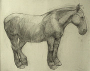 Anatomy Prints - Pony Print by Cynthia Harvey