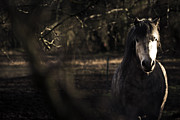 Pony Metal Prints - Pony in the Brambles Metal Print by Justin Albrecht