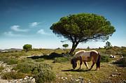 Pony Pasturing Print by Carlos Caetano