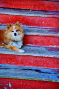 Little Dog Photos - Pooch by Emily Stauring