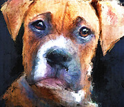 Boxer Painting Framed Prints - Pooch Framed Print by Robert Smith