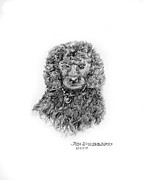 Jim Hubbard Prints - Poodle Print by Jim Hubbard