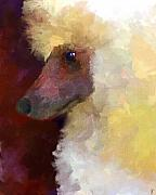 Standard Paintings - Poodle Portrait by Jai Johnson