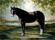 Dutch Warmblood Paintings - Pool Of Light by Candace Bell
