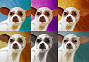 Chihuahua Artwork Framed Prints - Pop Art Chihuahua  Framed Print by Jeff Mueller