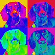 Dachshund Digital Art Prints - Pop Art Dachshund Print by Renae Frankz