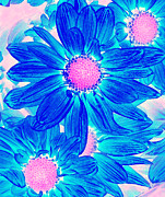 Pop Art Daisies 10 Print by Amy Vangsgard