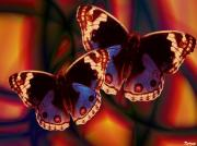 Pop Art Mixed Media - Pop butterflies by Francis Erevan