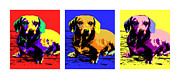 Dachshund Art Paintings - Pop Dachshund by Laura Sotka