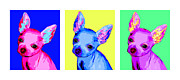 Chihuahua Colorful Art Prints - Pop Teacups Print by Laura Sotka