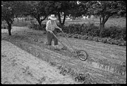 David Riccardi - Pop Tilling the Garden...