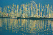 Reflection In Water Photo Prints - Poplars in late autumn sunlight Print by Anonymous