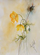 Lucia Del - Poppies And Bud