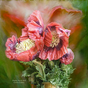 Orange Poppy Art Posters - Poppies Big And Bold Poster by Carol Cavalaris