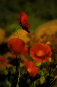 Poppies Art Prints - Poppies Print by Bonnie Bruno