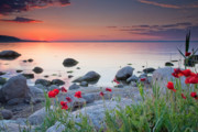 Twilight Framed Prints - Poppies By the Sea Framed Print by Evgeni Dinev