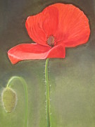 Red Poppies Pastels - Poppies by Catherine Dewulf