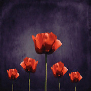 Red Flowers Digital Art - Poppies Fun 01b by Variance Collections