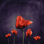 Red Flower Digital Art - Poppies Fun 02b by Variance Collections