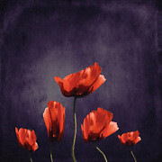 Square Digital Art Posters - Poppies Fun 03b Poster by Variance Collections