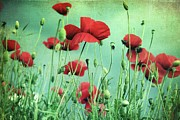 Corn Prints - Poppies In Field Print by By Julie Mcinnes