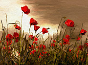 Digital Art Paintings - Poppies by James Shepherd