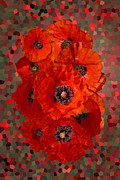 Nigel Chaloner Framed Prints - Poppies Framed Print by Nigel Chaloner