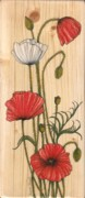 Red Poppies Drawings - Poppies on wood by Snezana Kragulj