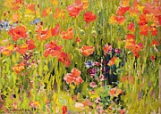 Field Of Flowers Paintings - Poppies by Robert William Vonnoh