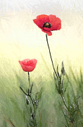 Poppy Painting Framed Prints - Poppies Framed Print by Stefan Kuhn