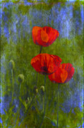 Photomanipulation Acrylic Prints - Poppies Acrylic Print by Veikko Suikkanen