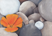 Ebsq Art - Poppy and Pebbles by Amanda Makepeace
