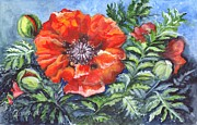 Poppy Drawings Prints - Poppy Brilliance Print by Carol Wisniewski