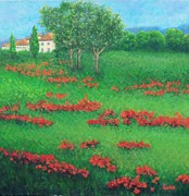 Lore Rossi Metal Prints - Poppy Field in Italy Metal Print by Lore Rossi