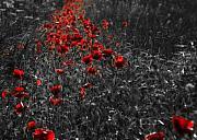 Poppy Field Print by Svetlana Sewell