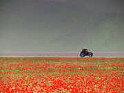 Flower Bed Prints - Poppy Flower Field With Tractor Print by Federico Gentili