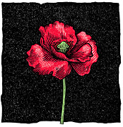 Poppy Flower, Woodcut Print by Gary Hincks