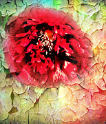 Textured Floral Mixed Media Framed Prints - Poppy Kiss Framed Print by Svetlana Sewell